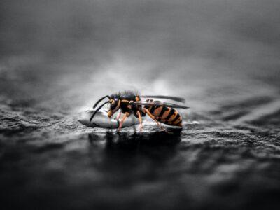 Wespen op onverwachte plaatsen