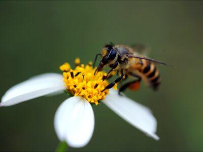 Wespen zijn nuttig